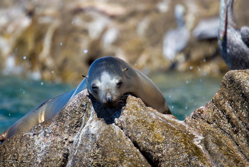 Sea lions at Bird Island